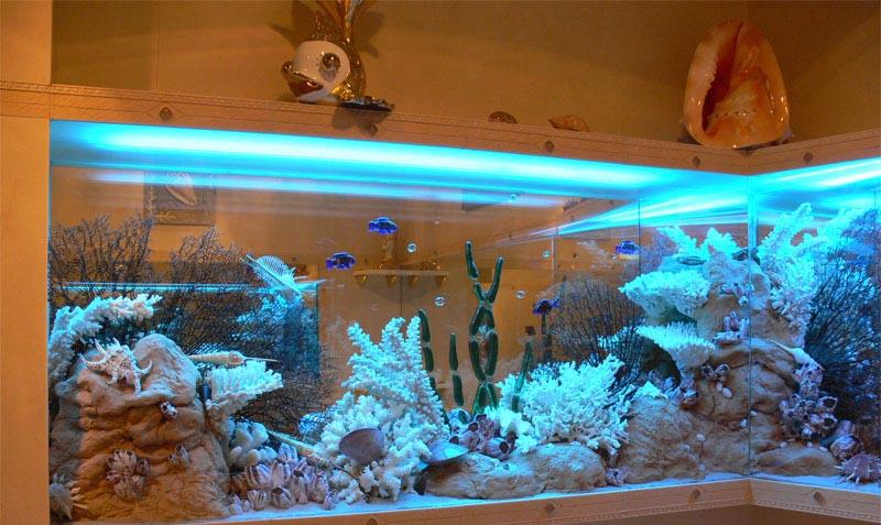 Сухой аквариум в интерьере